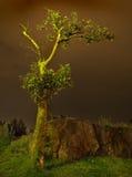 Árbol de la noche Imagen de archivo libre de regalías