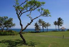 Árbol de la orilla de mar Imagen de archivo