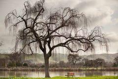 Árbol de la orilla del lago y un banco en invierno Foto de archivo libre de regalías