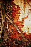 Árbol de la pared de ladrillo y de la raíz de la ruina Foto de archivo libre de regalías