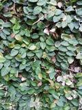Árbol de la pared del fondo de la naturaleza Imágenes de archivo libres de regalías