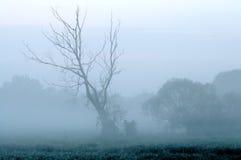 Árbol de la pesadilla imagenes de archivo