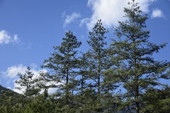Árbol de la pila Imagenes de archivo