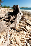 Árbol de la playa fotos de archivo libres de regalías