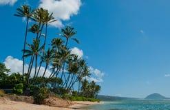 Árbol de la playa de Honolulu fotos de archivo
