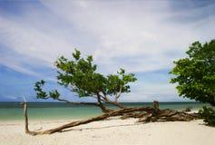 Árbol de la playa del tiempo del día Imagen de archivo
