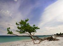Árbol de la playa del tiempo del día Imagen de archivo libre de regalías