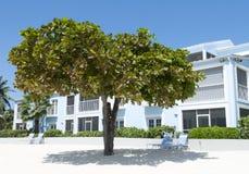 Árbol de la playa de Gran Caimán Imagenes de archivo