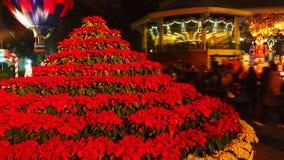Árbol de la poinsetia de la Navidad fotos de archivo