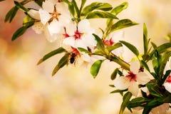 Árbol de la primavera Imagen de archivo