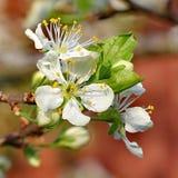 Árbol de la primavera Foto de archivo