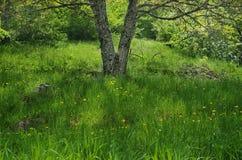 Árbol de la primavera Foto de archivo libre de regalías