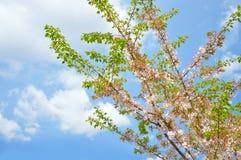 Árbol de la primavera Imagenes de archivo