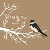 Árbol de la primavera con el pájaro en él en fondo del café Fotografía de archivo libre de regalías