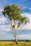 Árbol de la primavera con las hojas verdes frescas Imagen de archivo libre de regalías