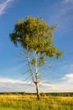 Árbol de la primavera con las hojas verdes frescas Fotografía de archivo