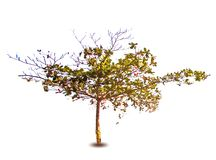 Árbol de la primavera del vector Foto de archivo