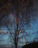 Árbol de la primavera de Rusia del arco iris fotos de archivo