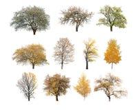 Árbol de la primavera y del otoño Fotos de archivo