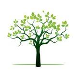 Árbol de la primavera y hojas verdes Fotos de archivo libres de regalías