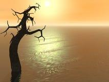 Árbol de la puesta del sol Imagen de archivo libre de regalías