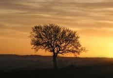 Árbol de la puesta del sol Foto de archivo