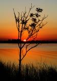 Árbol de la puesta del sol Imágenes de archivo libres de regalías
