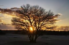 Árbol de la puesta del sol Imagen de archivo