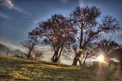 Árbol de la puesta del sol Fotografía de archivo libre de regalías