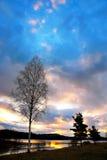 Árbol de la puesta del sol y de abedul Fotografía de archivo