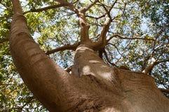 Árbol de la raíz Imagenes de archivo