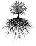 Árbol de la raíz fotos de archivo libres de regalías
