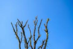 Árbol de la rama Foto de archivo