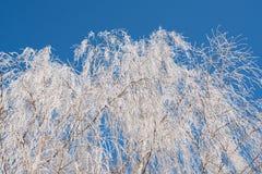 Árbol de la rama de Frost Imagen de archivo libre de regalías