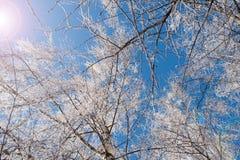 Árbol de la rama de Frost Imagen de archivo