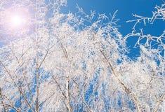 Árbol de la rama de Frost Imágenes de archivo libres de regalías