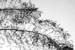 Árbol de la rama de la silueta Foto de archivo libre de regalías