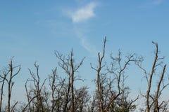 Árbol de la rama en el cielo Imagen de archivo libre de regalías