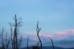 Árbol de la rama en el cielo azul Fotografía de archivo libre de regalías