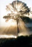 Árbol de la sabiduría Foto de archivo