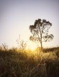 Árbol de la salida del sol Fotos de archivo