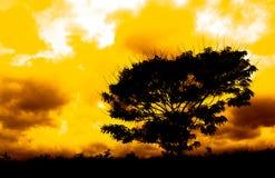 Árbol de la silueta Imagenes de archivo