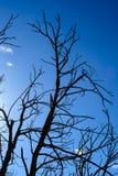 Árbol de la silueta Imagen de archivo