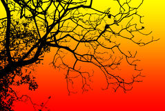 Árbol de la silueta Fotos de archivo libres de regalías