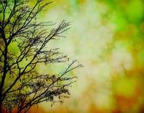 Árbol de la silueta con el bokeh colorido Fotos de archivo
