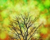 Árbol de la silueta con el fondo colorido del bokeh Fotografía de archivo libre de regalías