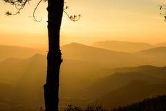 Árbol de la silueta con el fondo de la salida del sol Fotografía de archivo