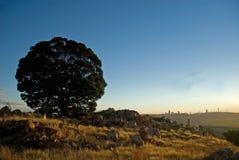 Árbol de la silueta de Johannesburg foto de archivo