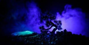 Árbol de la silueta en fondo de la Luna Llena Luna Llena que sube sobre árbol del estilo japonés contra el cielo de niebla entona Fotos de archivo libres de regalías