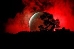 Árbol de la silueta en fondo de la Luna Llena Luna Llena que sube sobre árbol del estilo japonés contra el cielo de niebla entona Fotografía de archivo